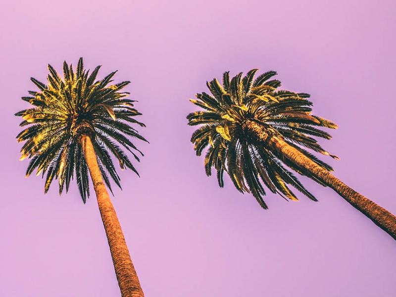 Proco Los Angeles
